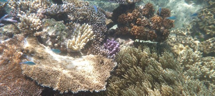 The Great Barrier Reef Effect